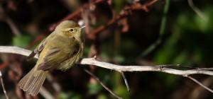 Pájaro apoyado sobre una rama
